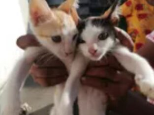 Kittens for Kind Homes
