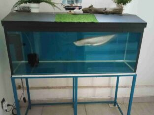 Aravana with fish tank