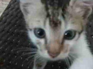 Kitten For Kind Home Kotte